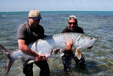 Image gallery tarpon fish for Tarpon springs fishing