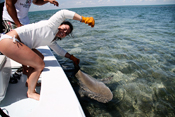 Emily with her first Lemon Shark