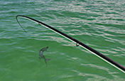 Florida Keys Tarpon Fishing - Fly Fishing